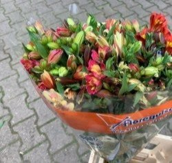 Alstromeria mix Medium